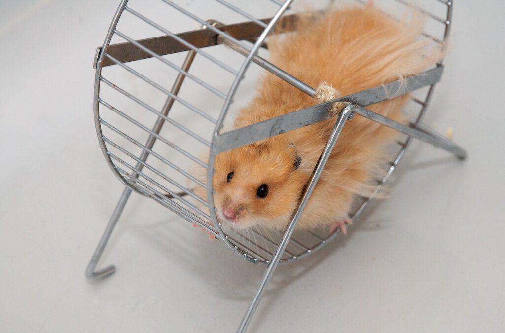 Les fins de semaines d'un(e) hypersensible ou comment sortir de la roue du hamster.